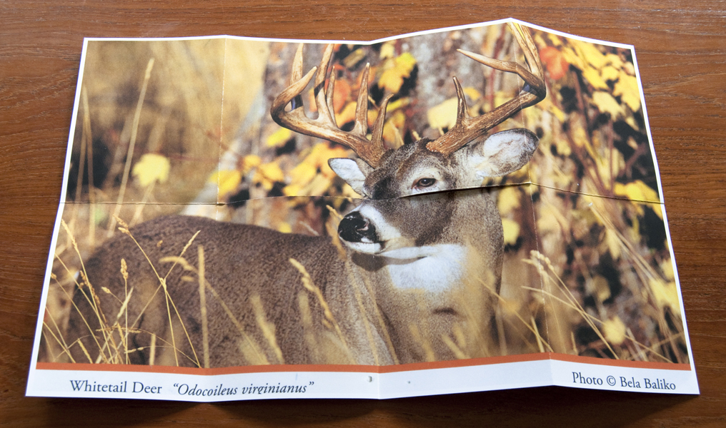 http://www.lexthompson.com/files/gimgs/20_20-deer-blind-artist-book-unfolded-verso.jpg